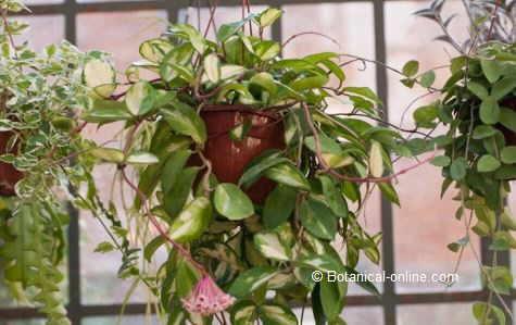 Mejores plantas de interior for Nombre de plantas de interior