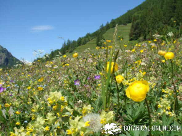 Ecosistema - Cosas sobre las plantas ...