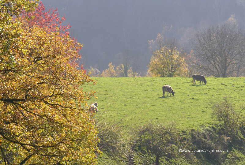 Paisaje de montaña con vacas