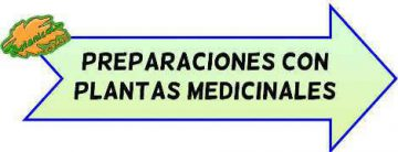 preparaciones con plantas medicinales