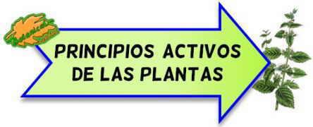 principios activos de las plantas