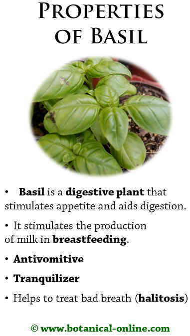 Properties of basil