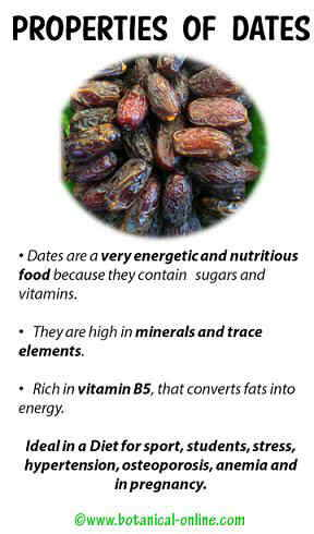 Nutrition And Health Benefits Of Dried Dates