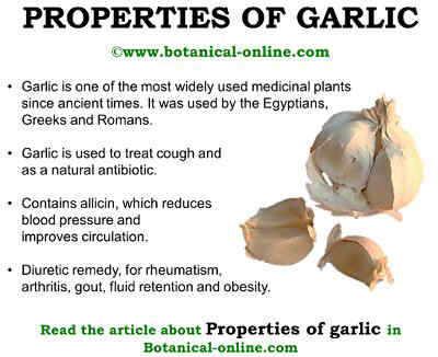 chemical analysis of garlic 参考文献no 801163 标题: chemical investigations of alliin, the specific principle of garlic 作者: stoll, a seebeck, e 来源: adv enzymol 1951,11377-400 合成路线图解说明.