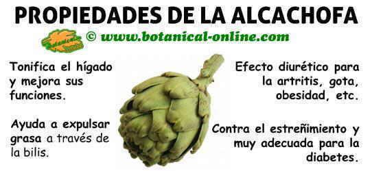 propiedades de las alcachofas