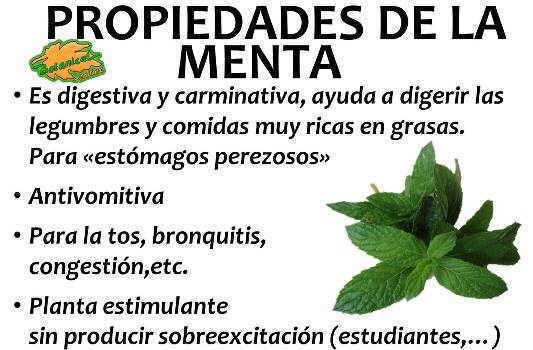 propiedades medicinales de la menta