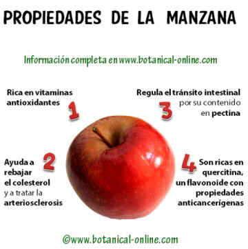 propiedades alimentarias de las manzanas