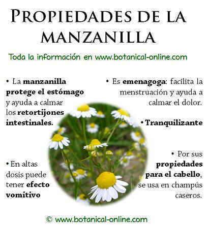 Ejercicios de pronombres personales nodari bike for Manzanilla planta medicinal para que sirve