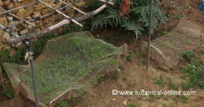 huerto protegido con una red