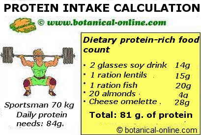 Example of dietary calculation of foods rich in protein