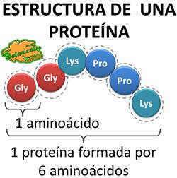 estructura basica de una proteina