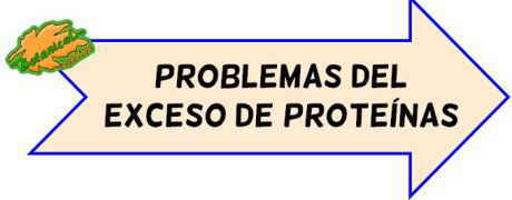 problemas exceso proteinas