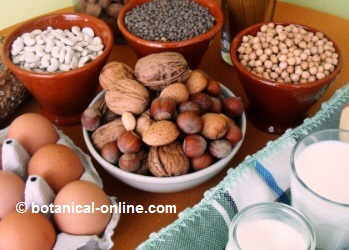 foods rich in proteins in a ovovegetarian diet