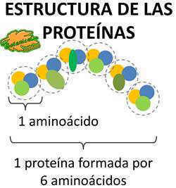 estructura quimica de una proteina