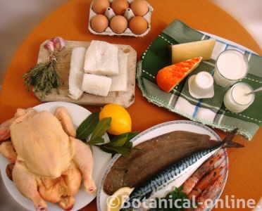 alimentos animal proteina b12
