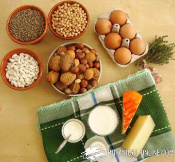 alimentos de origen vegetal ricos en proteínas