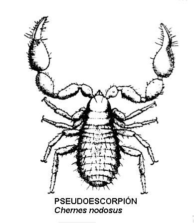 pseudoescorpión