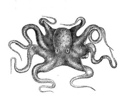 Características del Pulpo