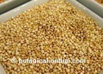 La quinoa contiene mucho magnesio