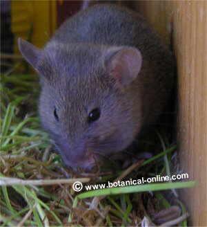 Animales roedores