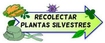 cómo recolectar plantas silvestres