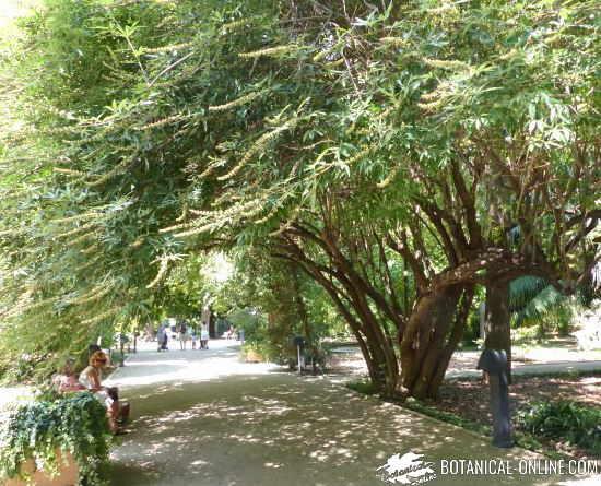 jardin botanico valencia universidad