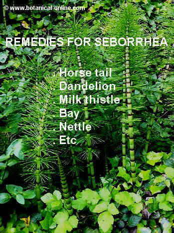 Remedies seborrhea