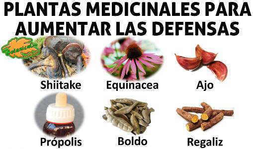 remedios naturales plantas para aumentar las defensas
