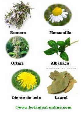 Tratamientos naturales para el cabello da ado for Tipos de hierbas medicinales