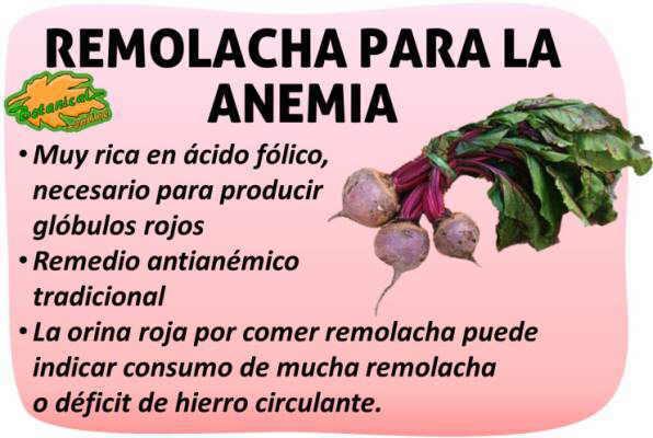 Propiedades de la remolacha para la anemia falta de hierro