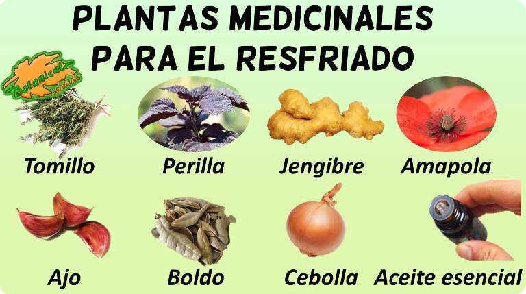 plantas medicinales remedios resfriado tratamiento natural