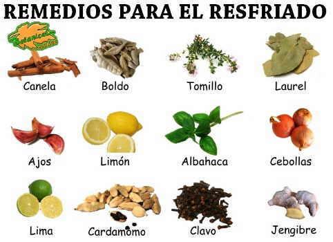 Remedios para el resfriado for Tipos de hierbas medicinales