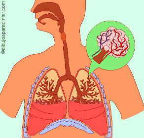 Dibujo de aparato respiratorio