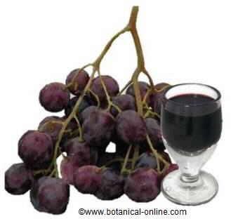 Resveratol vino uva