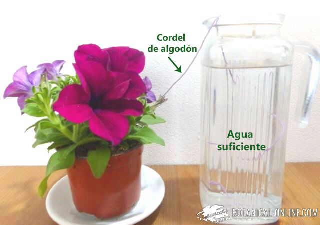 autorriego vacaciones botella de agua y un cordel algodon cordon