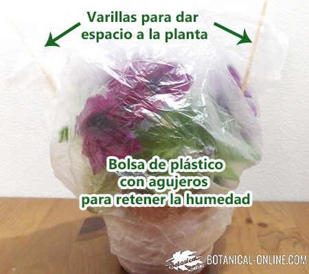 maceta riego vacaciones conservar humedad bolsa plastico