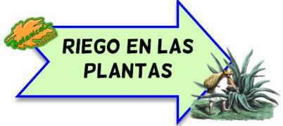riego plantas