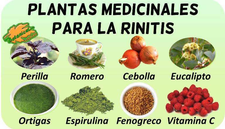 remedios rinitis tratamiento natural plantas medicinales