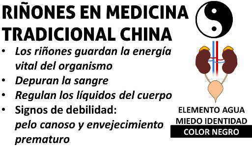 significado emociones color y debilidad de los riñones según la medicina tradicional china