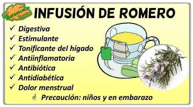 propiedades de la infusion de romero rosmarinus officinales beneficios