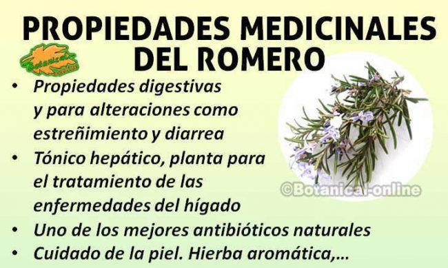 Beneficios y propiedades medicinales curativas del romero en remedios naturales