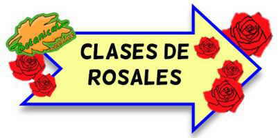 clases de rosales