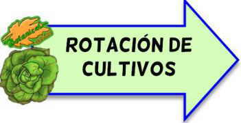 rotacion de cultivos
