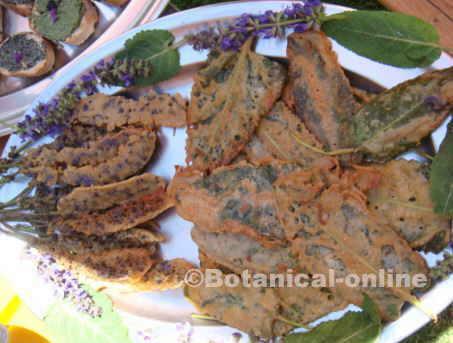 hojas de salvia fritas