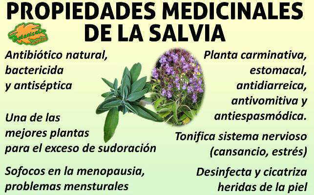 propiedades medicinales, curativas y beneficios de la salvia