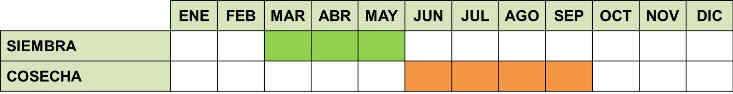 calendario de cultivo de la sandía