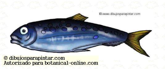 sardina dibujo