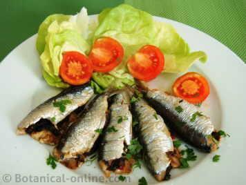sardinas al horno con ensalada