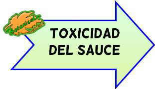 toxicidad del sauce