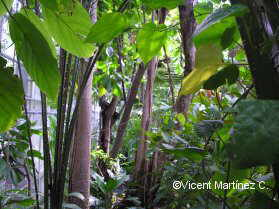 humid tropical forest